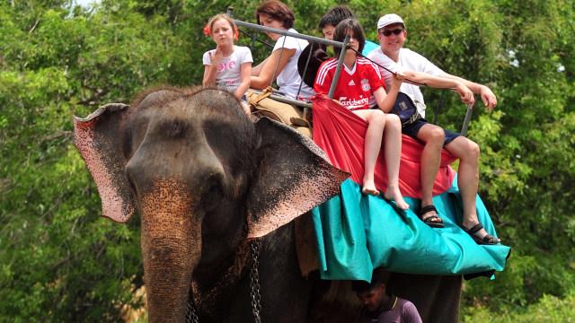 Kamboja Larang Wisatawan Naik Gajah
